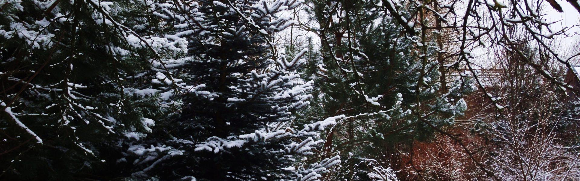 winter tuin