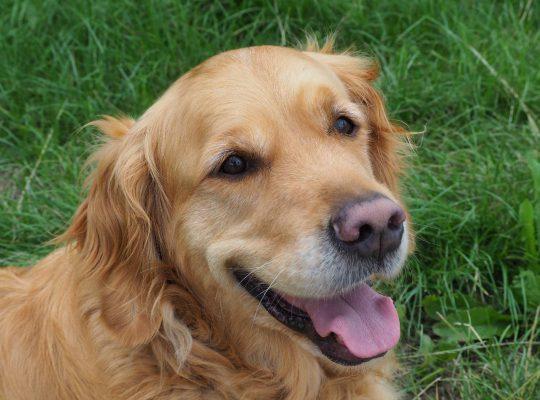 De positieve effecten van een therapiehond tijdens logopedie