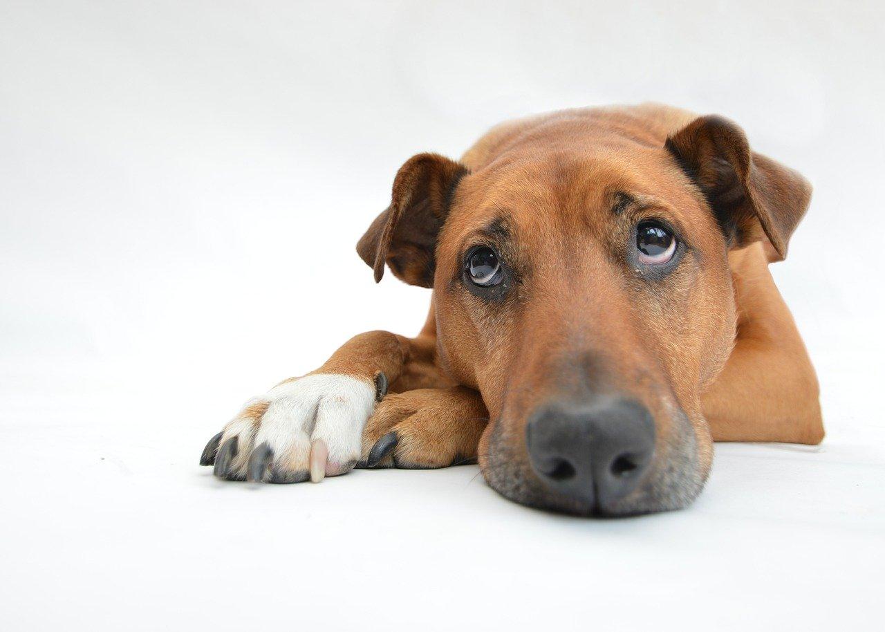 Alles wat je moet weten over gevoelige honden