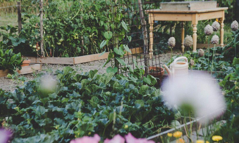 Creëer een ongerepte tuin met een permacultuur