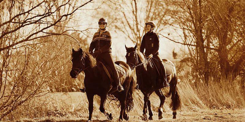 3 redenen om vaker te gaan paardrijden