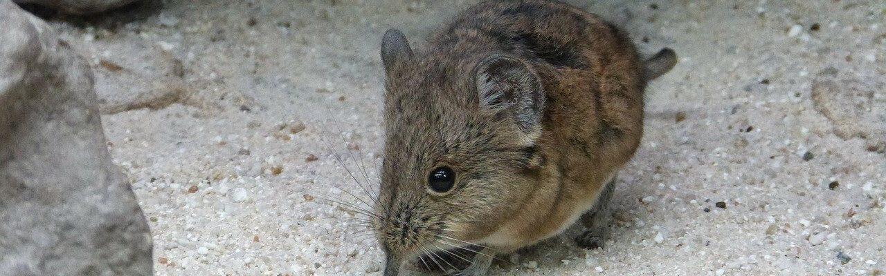 Dode muis in huis