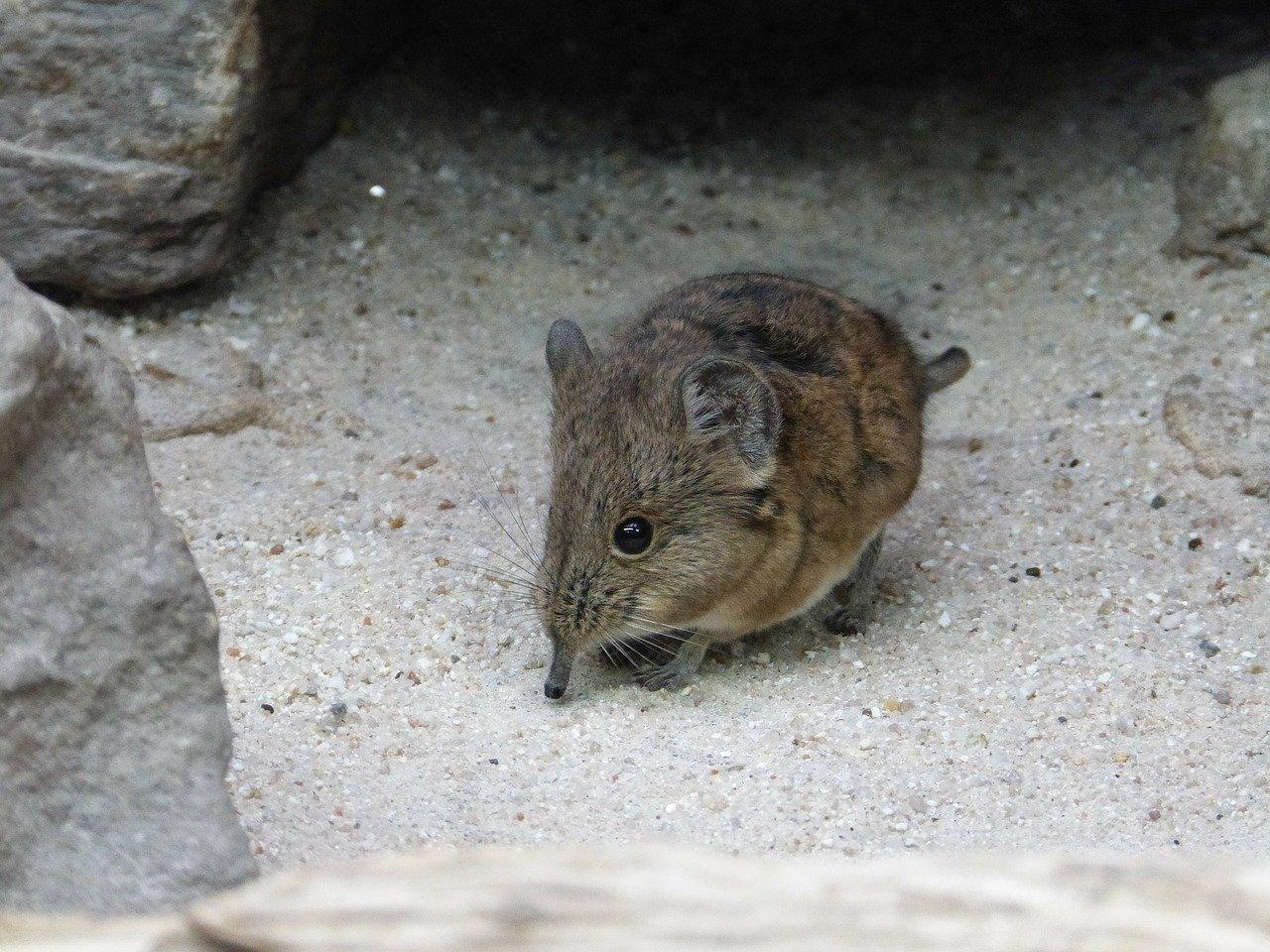 Dode muis in huis? Zo verwijder je eenvoudig nare luchtjes!